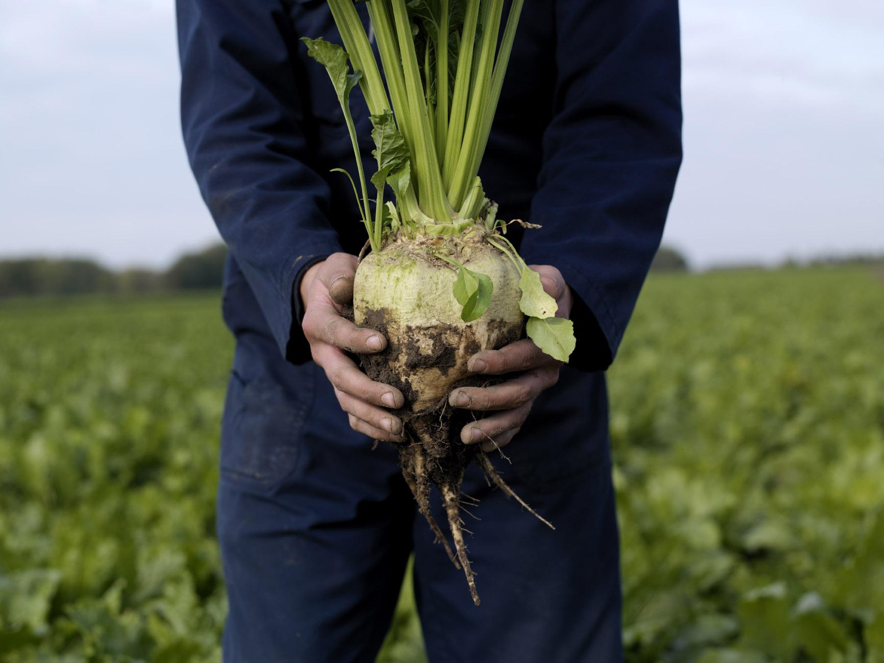 Cosun Beet Company - Precision farming met datagedreven advies